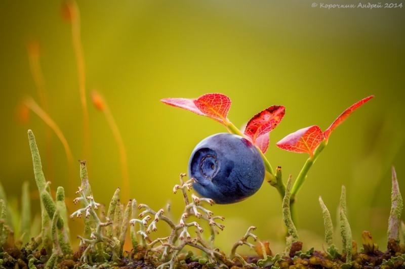 Лучшие фотографии National Geographic за 2014 год