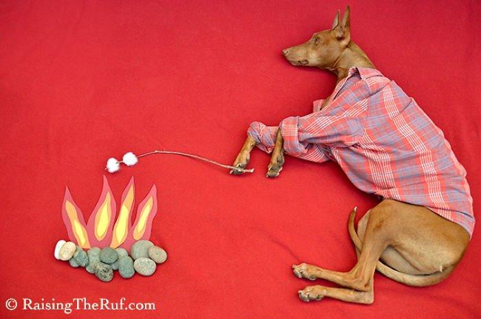 Приключения пса Руфуса во время сна