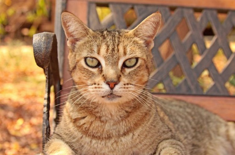 Дом котов в Калифорнии