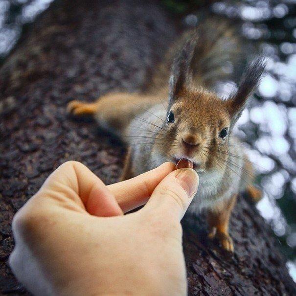 Лесные животные в объективе Консты Пункка