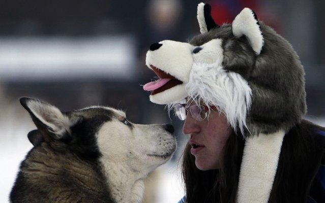 Гонки на собачьих упряжках в Чехии