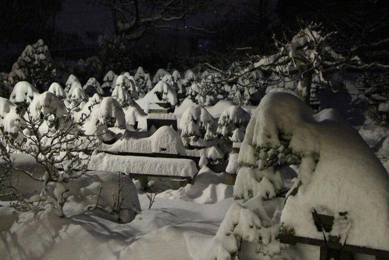 Картины и фигуры из снега, созданные природой