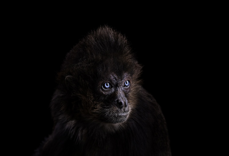 Портреты диких животных от фотографа Брэда Уилсона