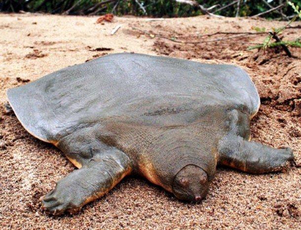 Самые необычные животные со странными пропорциями тел