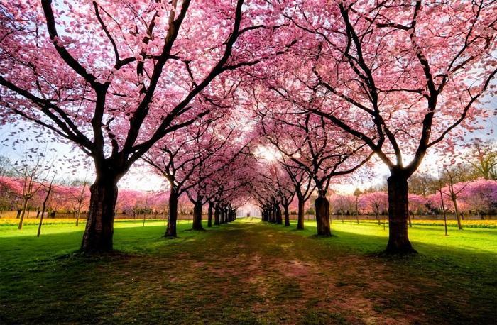 Самые красивые и необычные деревья в мире