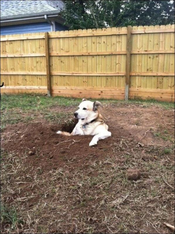 Собаки отдыхают в самых неожиданных местах