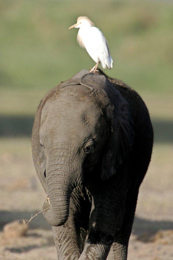 Животные тоже ездят верхом