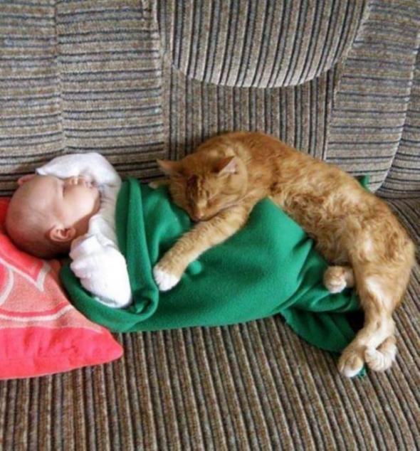 Коты умеют присматривать за детьми