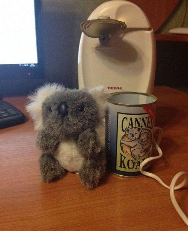 Консервированная коала - сувенир из Австралии
