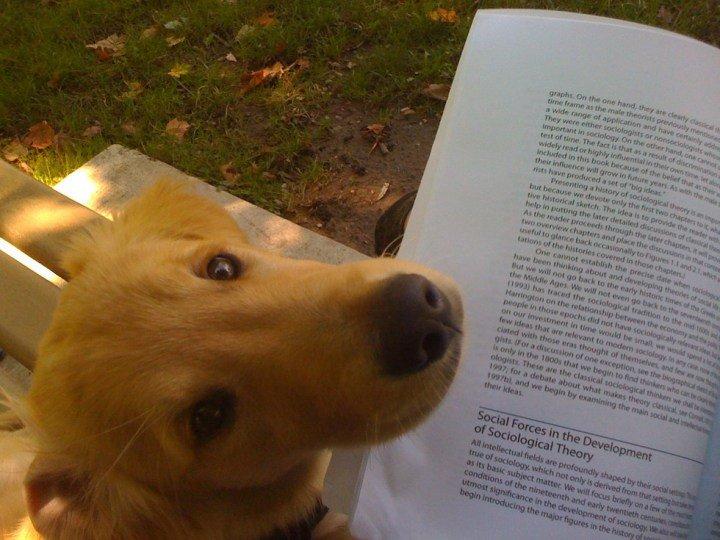 Животные, которые не дают своим хозяевам спокойно почитать