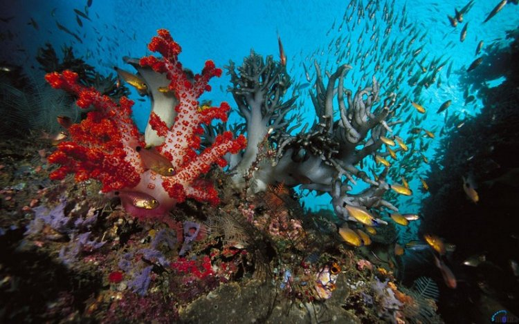 В мире кораллового рифа