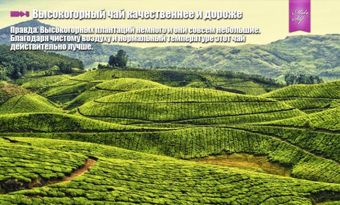 Распространенные мифы и факты о чае