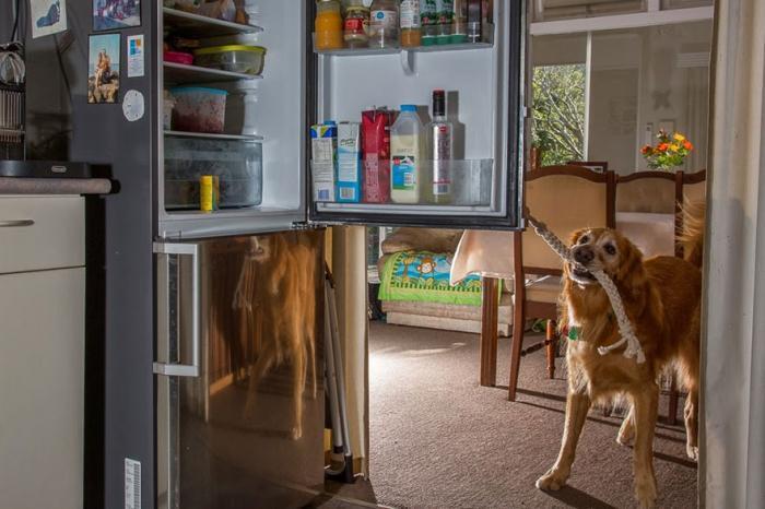 Трудолюбивые рабочие собаки