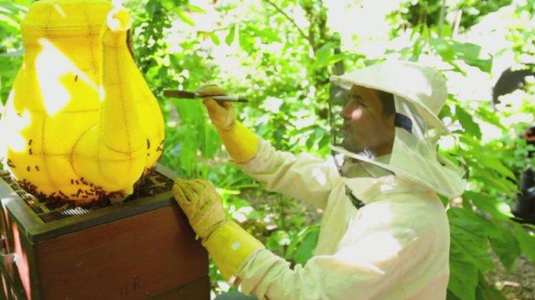 Пчелы вылепили чайник из сот