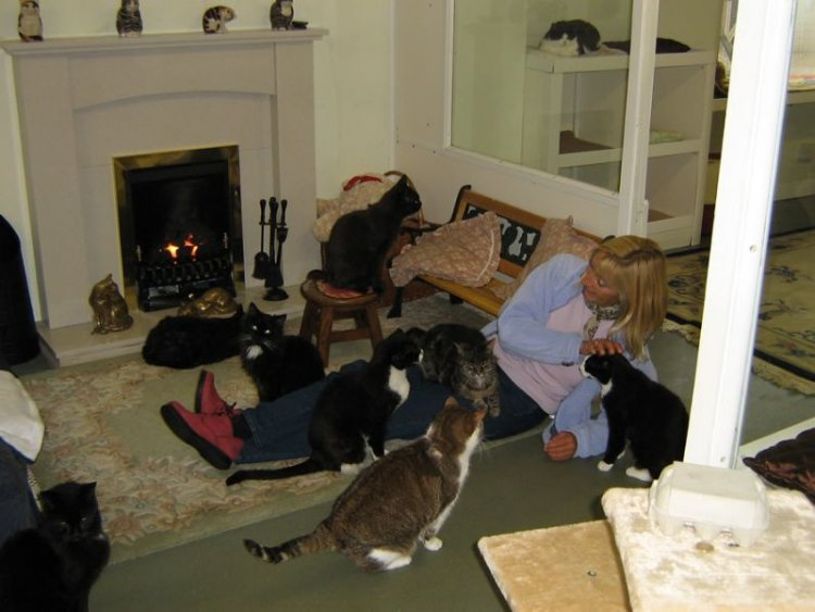 Уникальный дом престарелых для котов