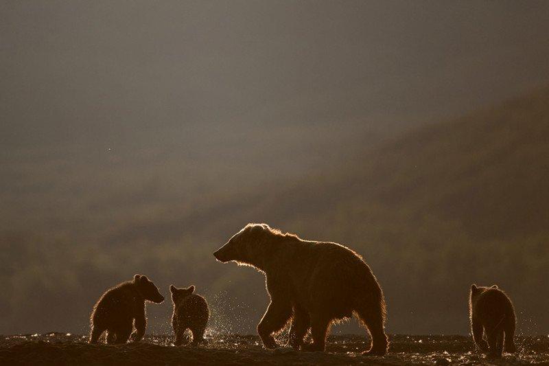 Дикие животные в кадре известного фотографа Сергея Горшкова