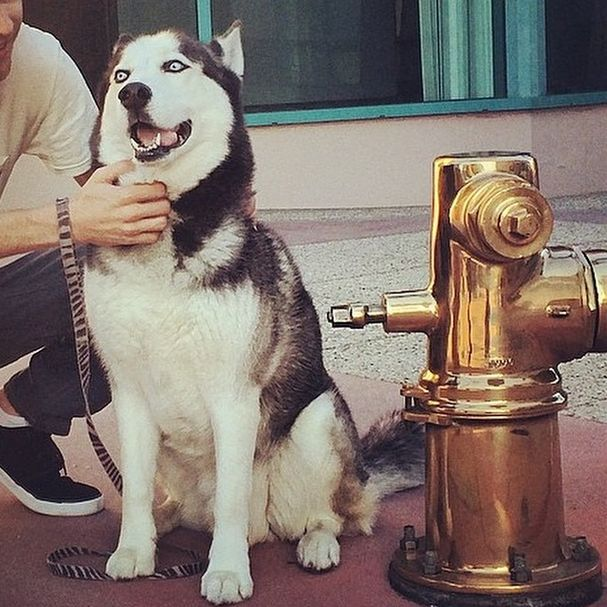 Жизнь собак богатых хозяев на фото из Instagram