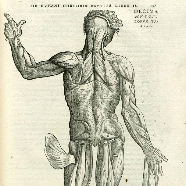 10 интересных фактов о мышцах