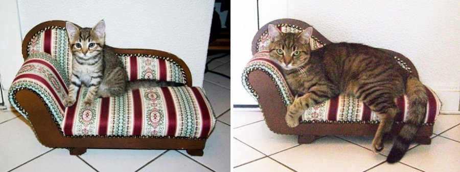 Котята, которые так быстро выросли