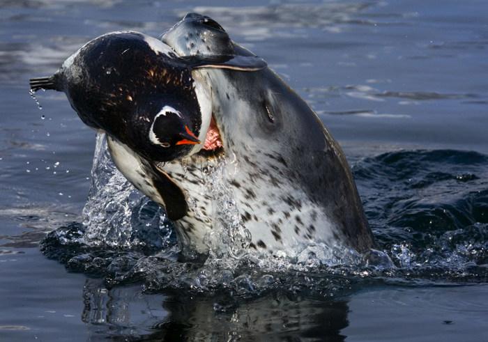 Фотографии дикой природы от Пола Никлена