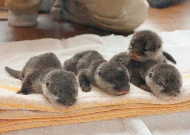 Новорожденные крошки: максимально милые
