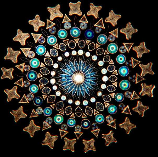 Микроскопические узоры из водорослей