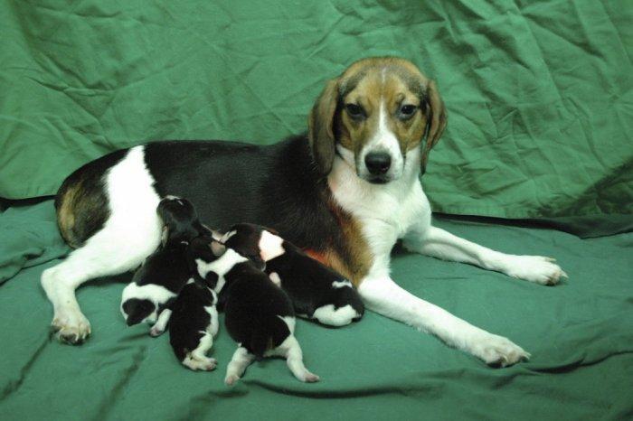 Генетически модифицированные животные