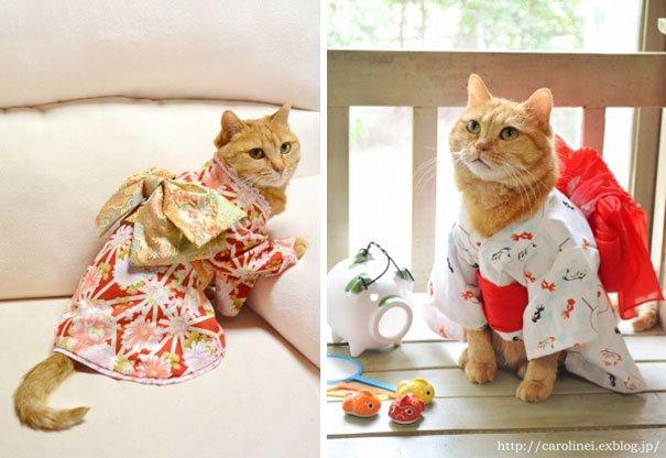 Сладости в виде кошек