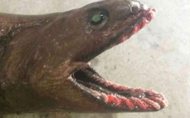 Невероятные морские существа, которые были обнаружены недавно