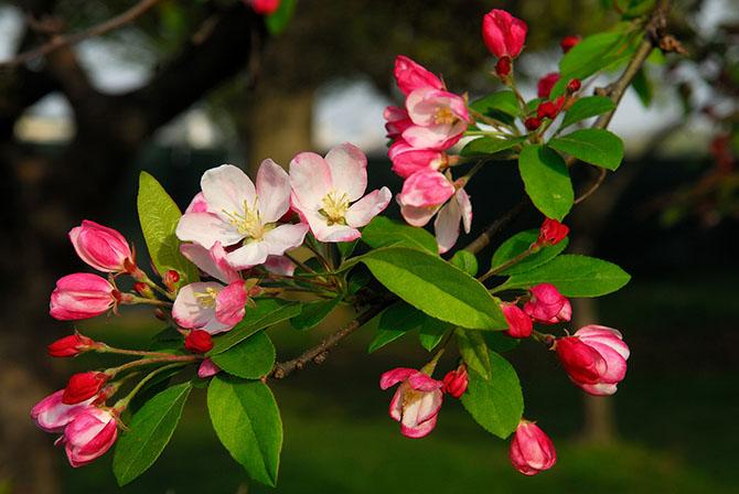Красота цветущих деревьев
