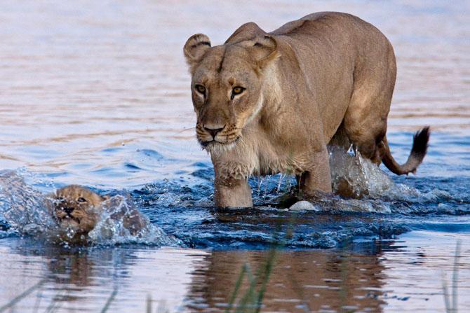 Животные со всего света