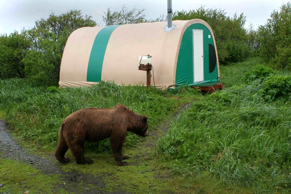Фото медведя заходящего в палатку