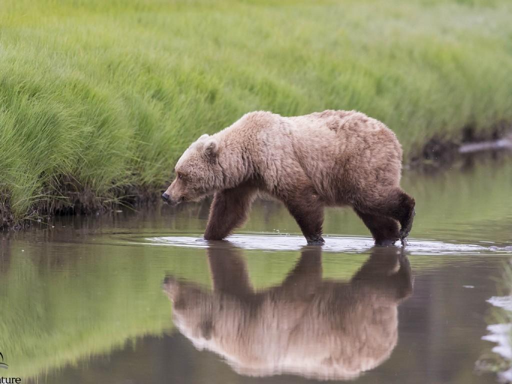 Медвежий лагерь на Аляске