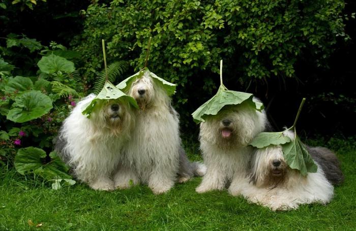 Неразлучные сёстры собаки