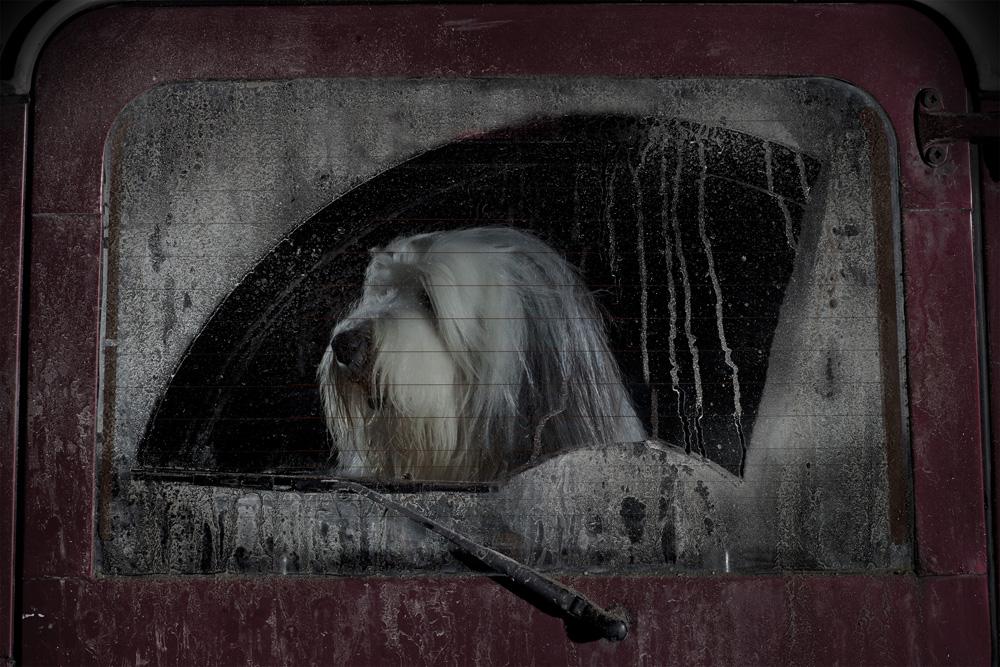Собаки, которых забыли в автомобилях