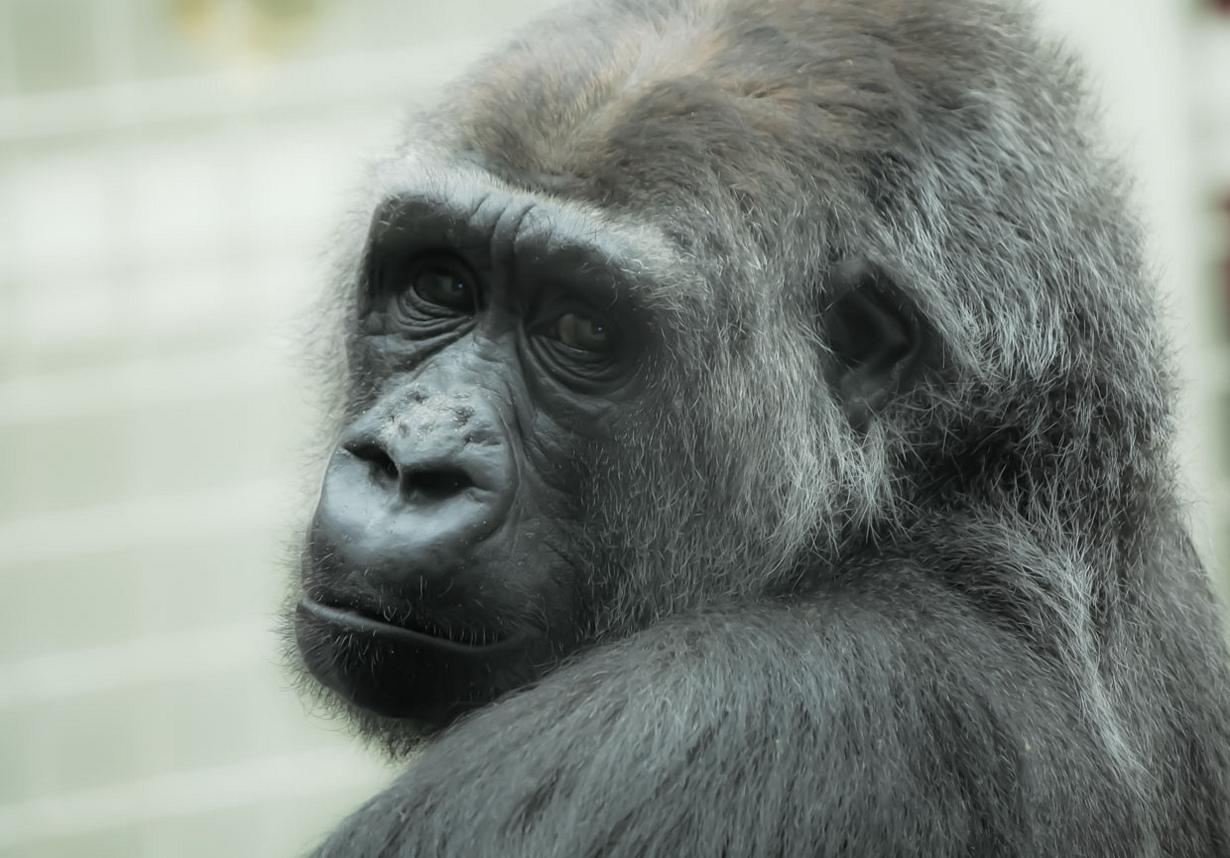 20 весьма интересных фактов о животных