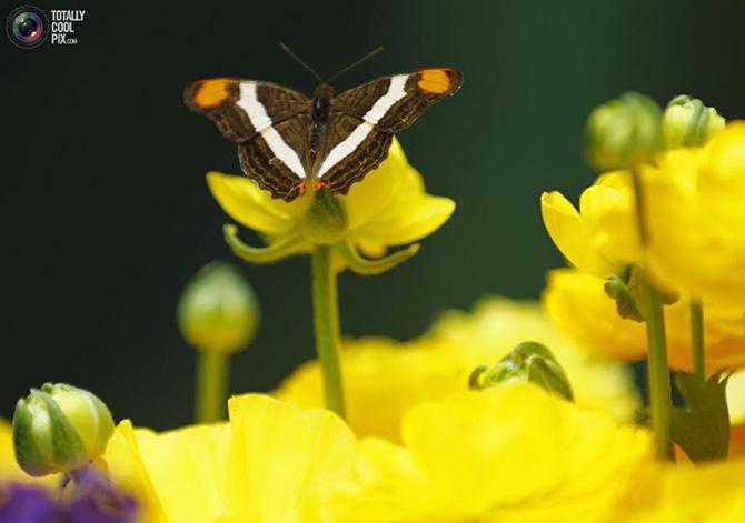 Выставка Джунгли с бабочками в Сан-Диего