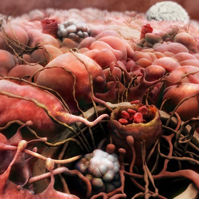 Впечатляющие изображения человеческого тела