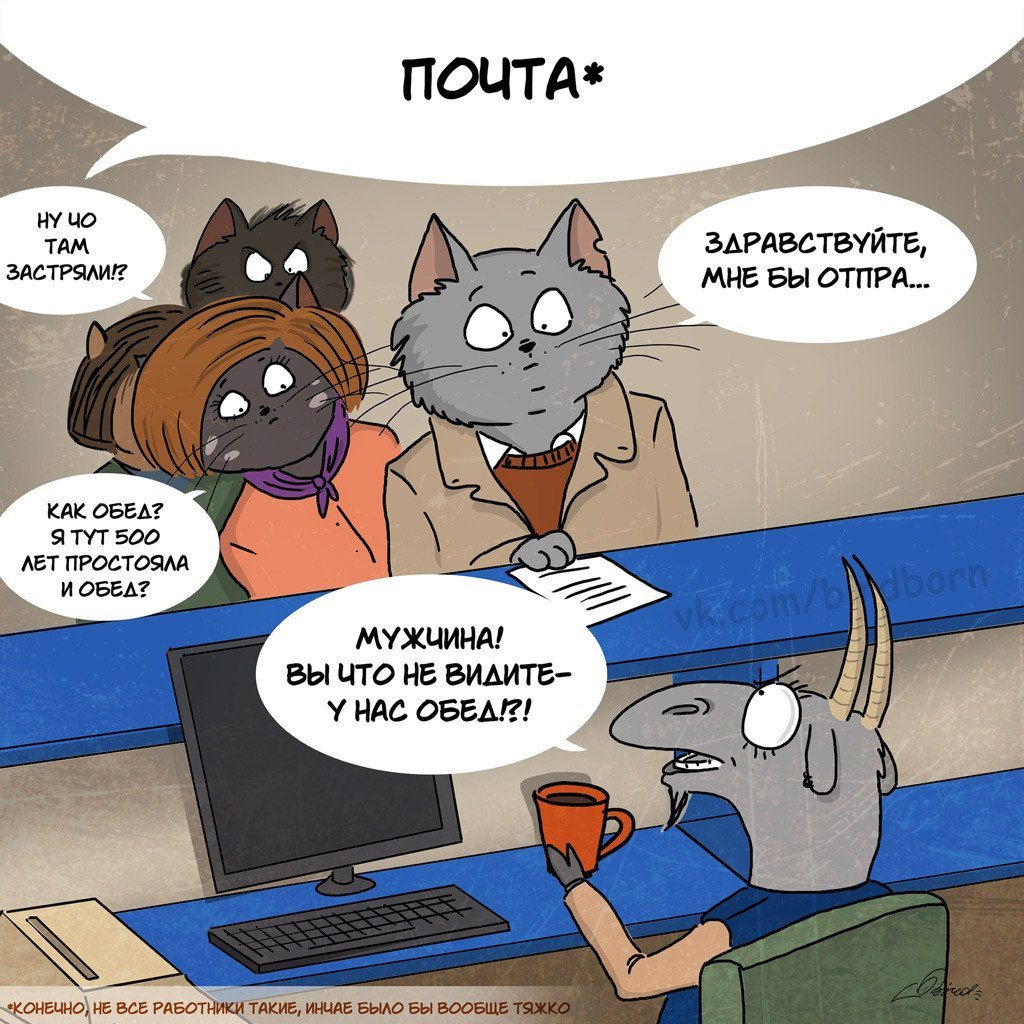 Юмор на социальную тему и коты