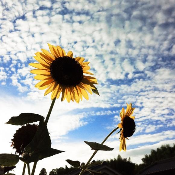 Фотографии, сделанные на iPhone 4