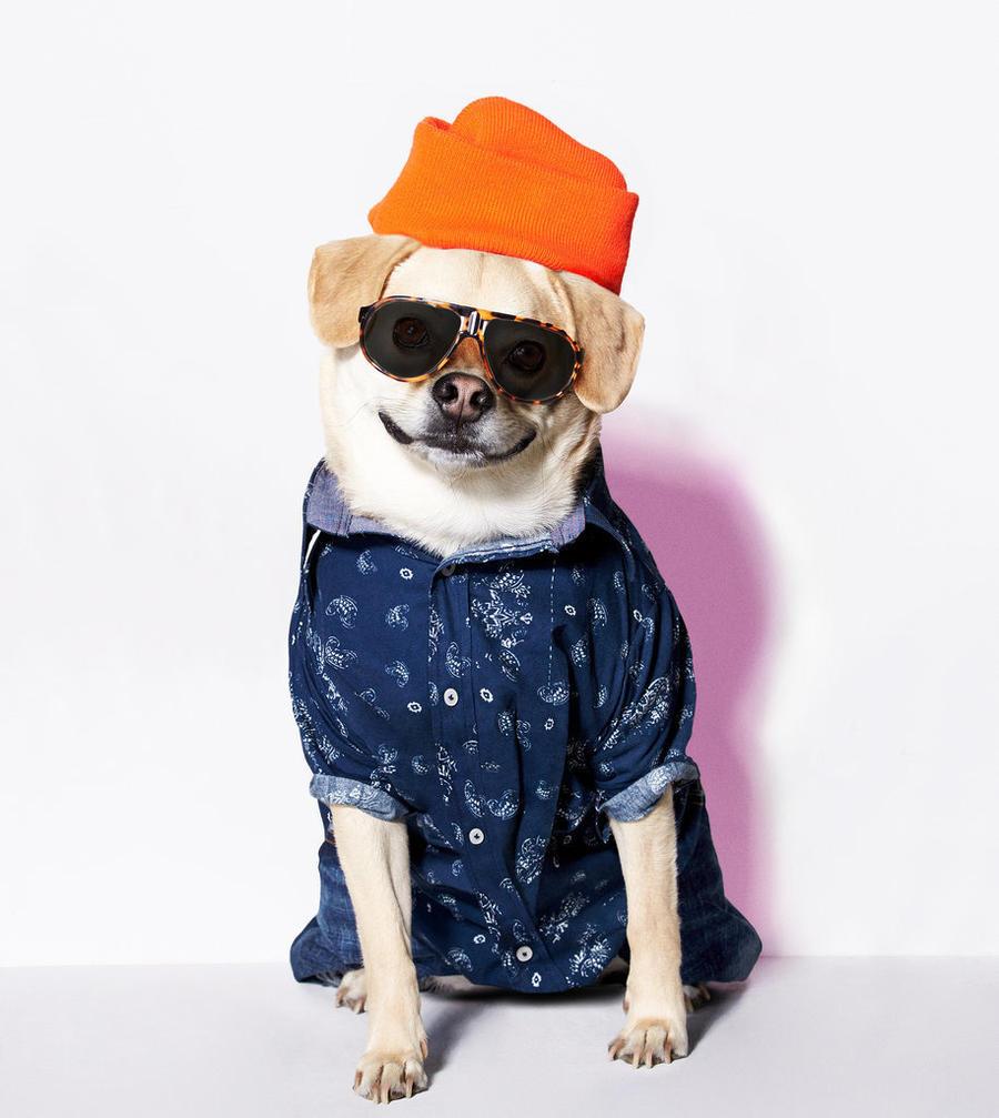 Одетые собачки картинки
