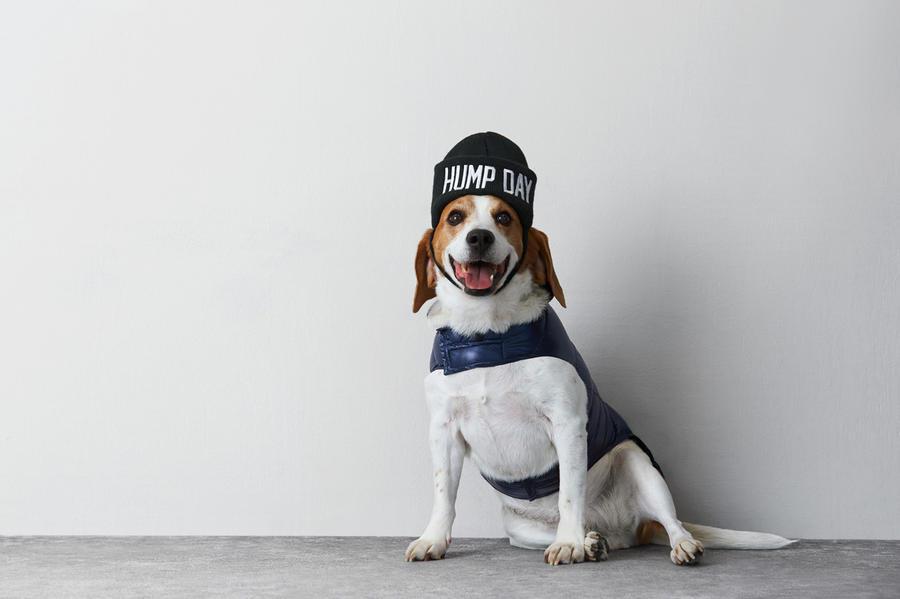Коллекция одежды для собак-модников