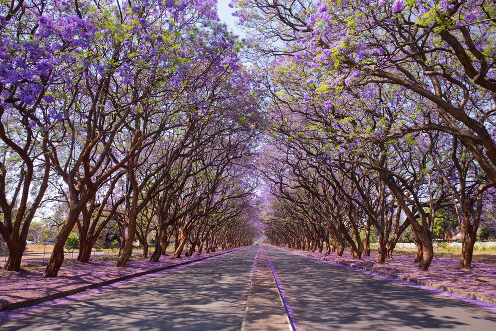 Тоннели из деревьев, которые создала сама природа