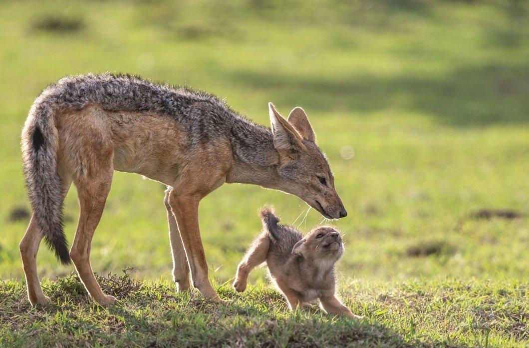 Жизнь диких животных на фотографиях