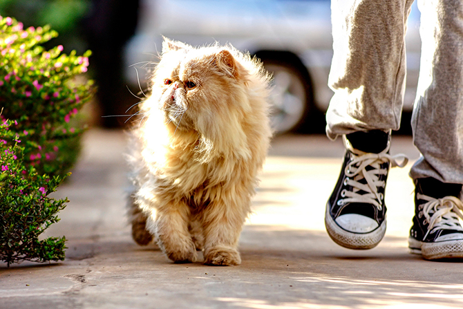 Любопытные факты о кошках