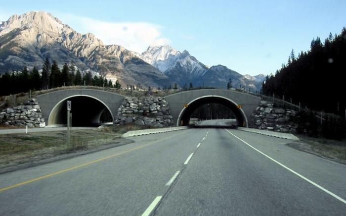 Пешеходные мосты для животных