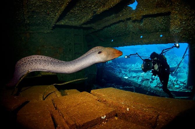 Победители конкурса Лучший подводный фотограф 2015