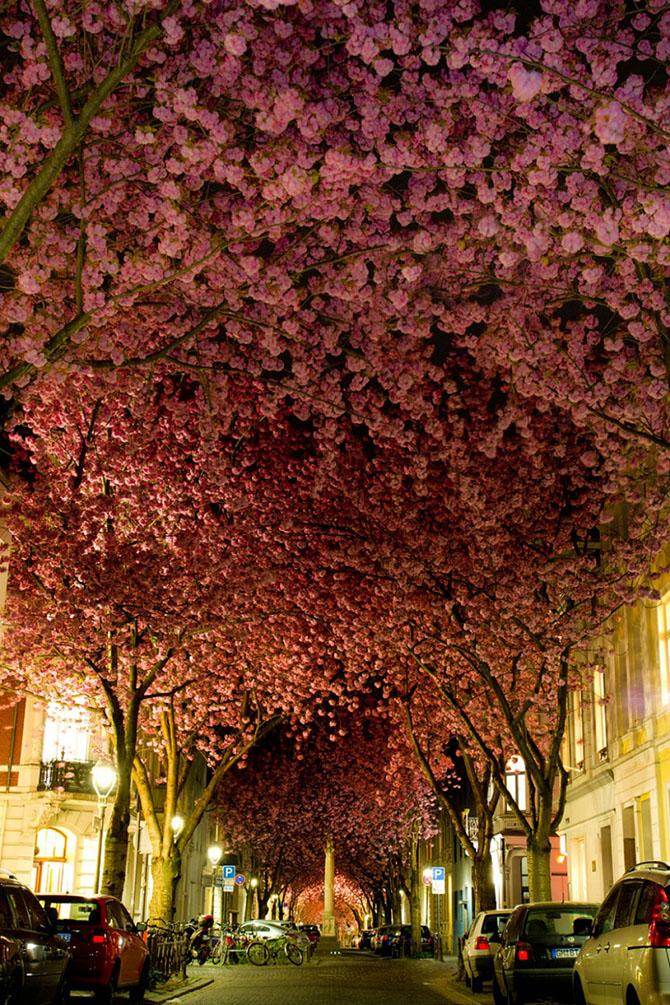 В Японии зацветает сакура