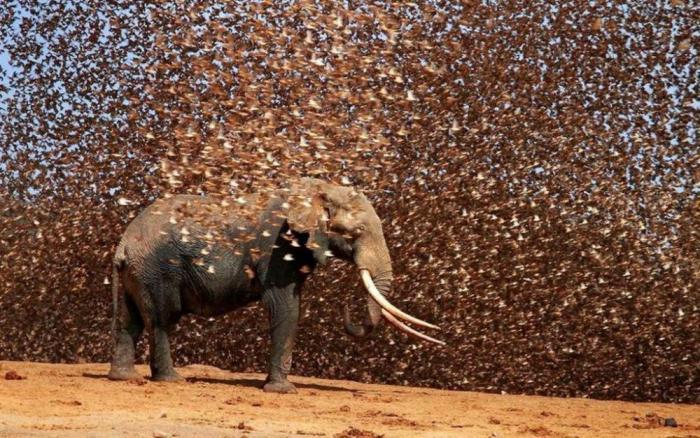 Фотографии из царства животных