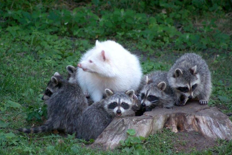 Очаровательные животные-альбиносы
